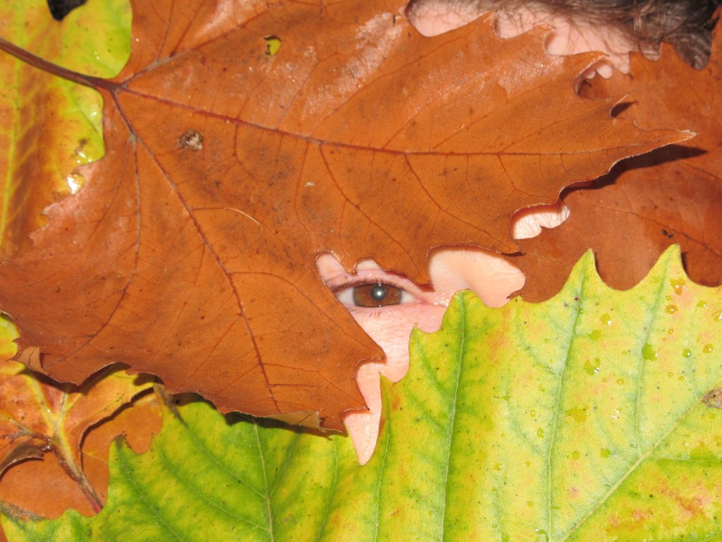 human brown eye surrounded by autumn leaves of sycamore tree